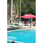 Matthew-Phillip-Diving-2